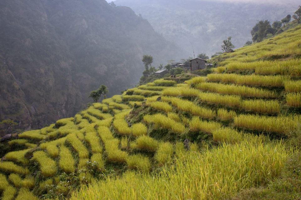 Manaslu Trek: Crops