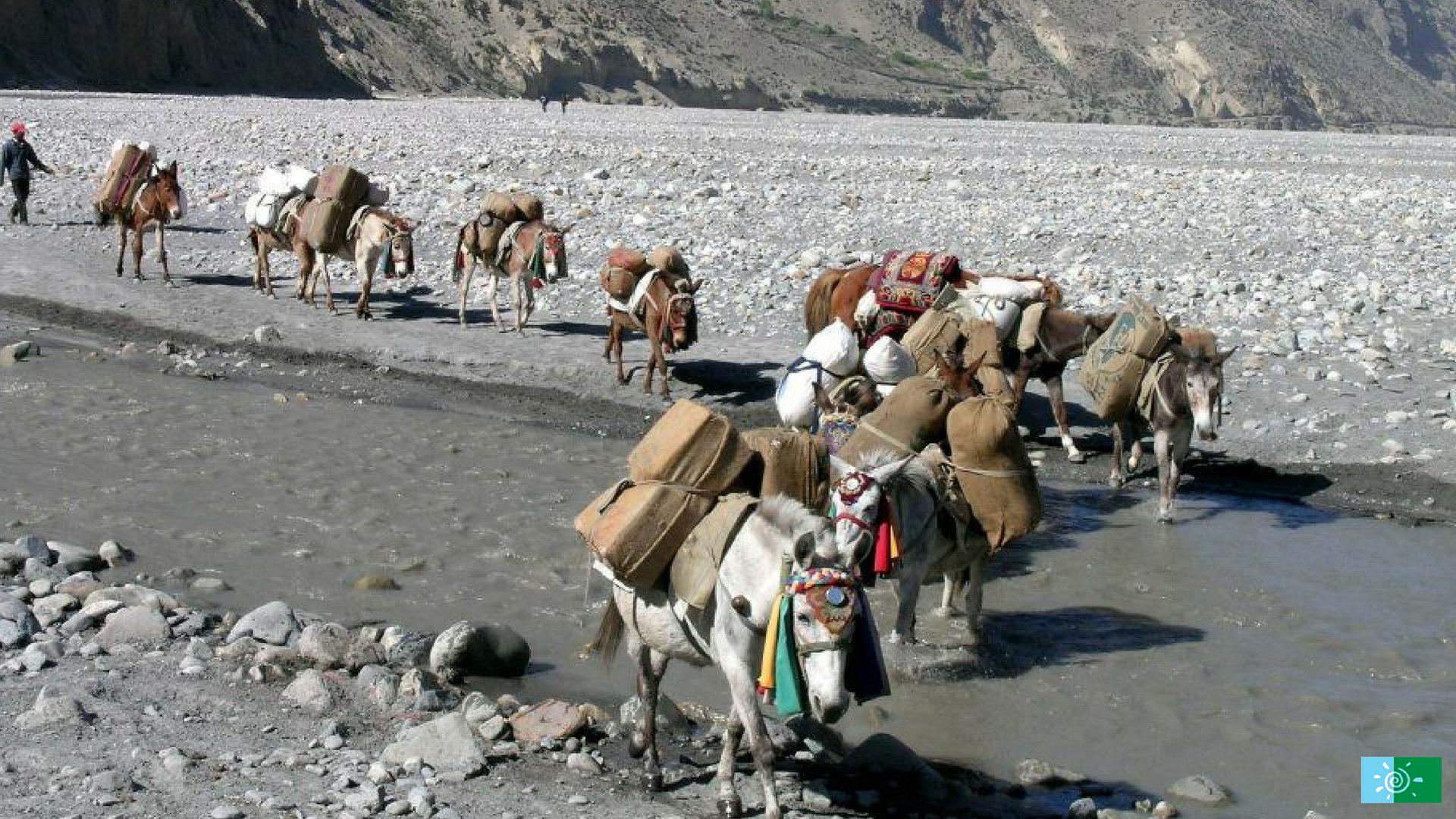horses in Mustang Trek