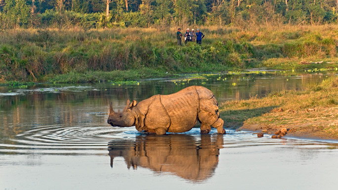 One horned rhinoceros in Chitwan National Park Nepal