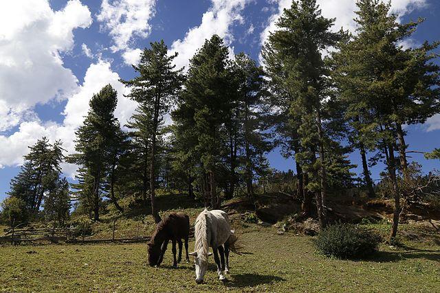Rara-National-Park