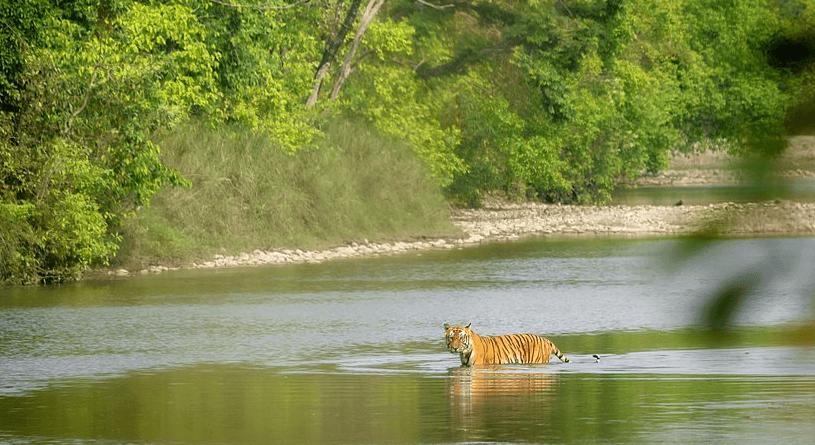 bardia-national-park