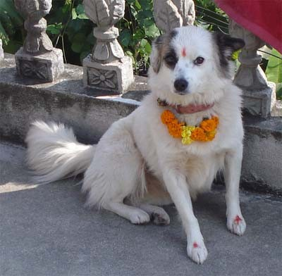 Dog-worship-in-Tihar