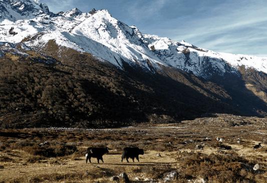 Lantang_national_park
