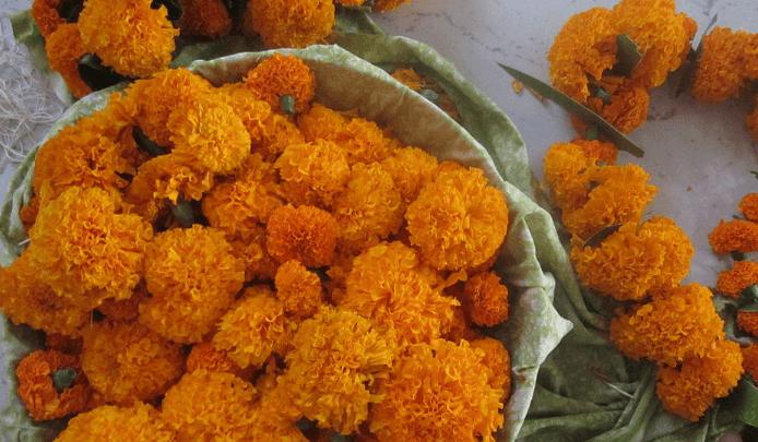 tihar-flowers
